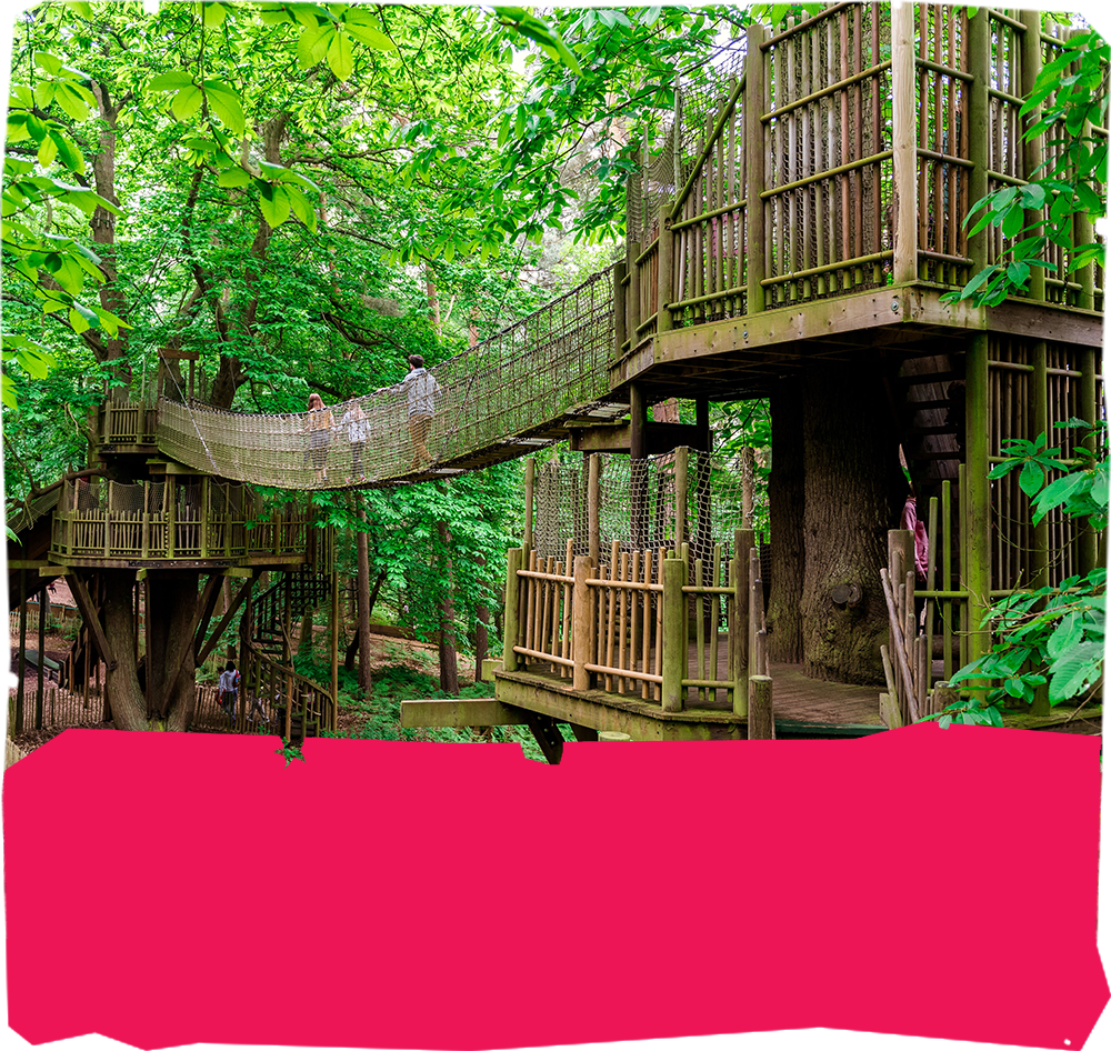 What is BeWILDerwood?